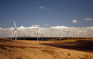 Lots of white wind turbines on a hillside which is golden brown in the sunlight. The sky is blue with some white clouds