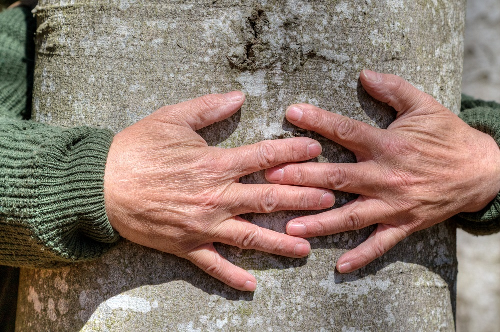 Person's hands circling a tree trunk as if hugging the tree