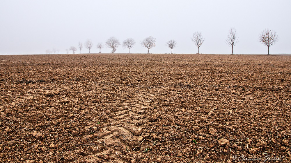 Soil in a field with a tractor tread stretching to a line of bare trees on the horizon